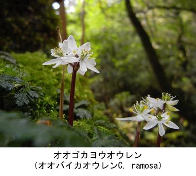 f:id:yachikusakusaki:20191204234431j:plain
