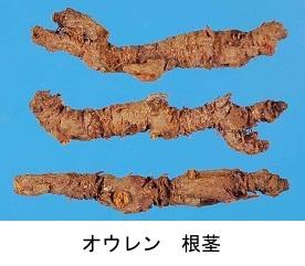 f:id:yachikusakusaki:20191205001406j:plain