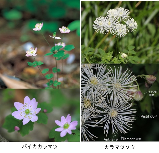 f:id:yachikusakusaki:20191205231213j:plain