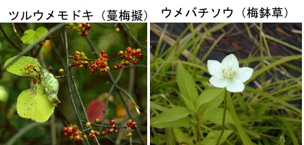 f:id:yachikusakusaki:20200116220911j:plain