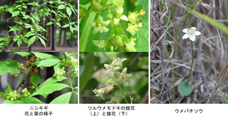 f:id:yachikusakusaki:20200116223027j:plain