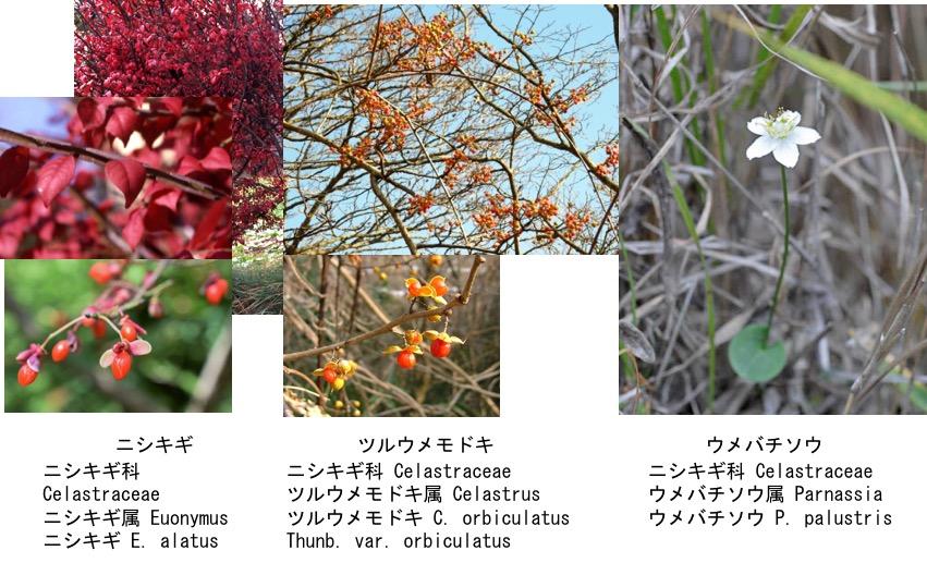 f:id:yachikusakusaki:20200116223551j:plain
