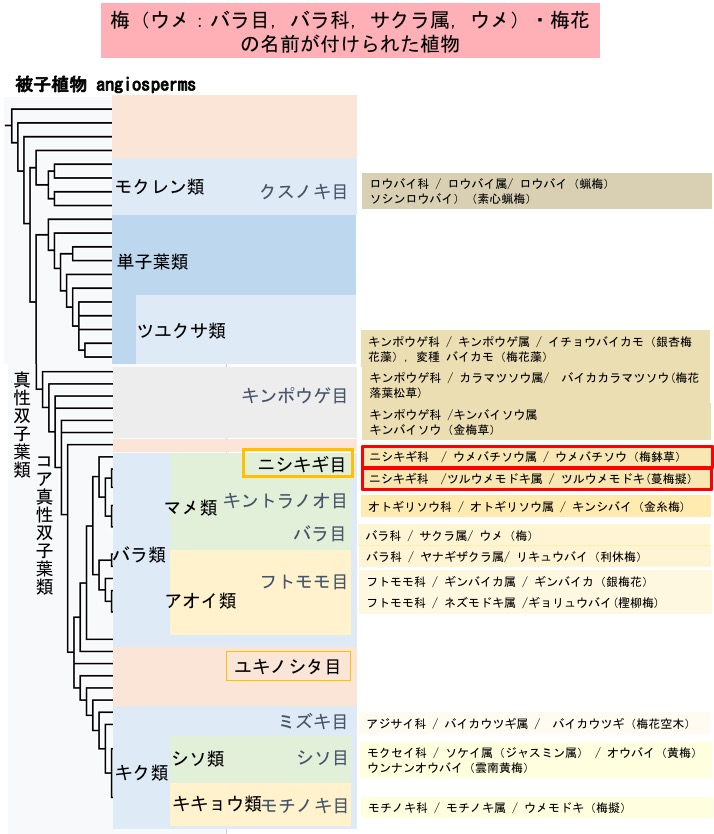 f:id:yachikusakusaki:20200116232022j:plain