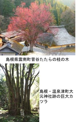 f:id:yachikusakusaki:20200126164949j:plain