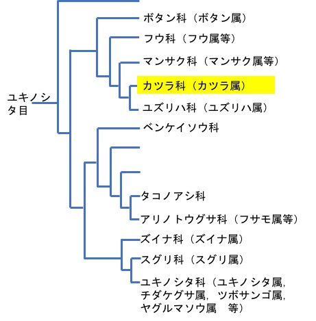 f:id:yachikusakusaki:20200126174024j:plain