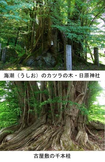 f:id:yachikusakusaki:20200126174327j:plain