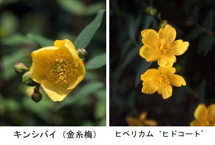 f:id:yachikusakusaki:20200201173251j:plain