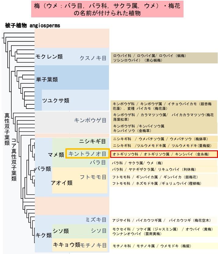 f:id:yachikusakusaki:20200201210622j:plain