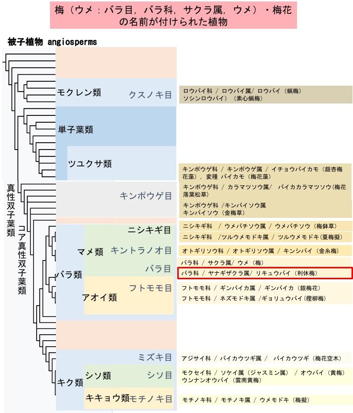 f:id:yachikusakusaki:20200202012147j:plain