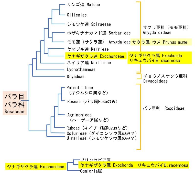 f:id:yachikusakusaki:20200202014052j:plain