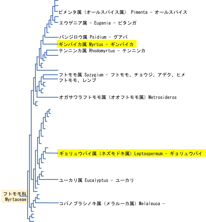 f:id:yachikusakusaki:20200202232008j:plain