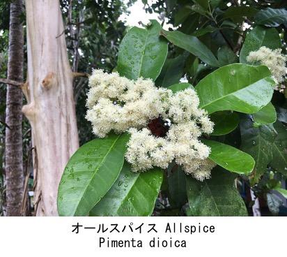 f:id:yachikusakusaki:20200202234702j:plain