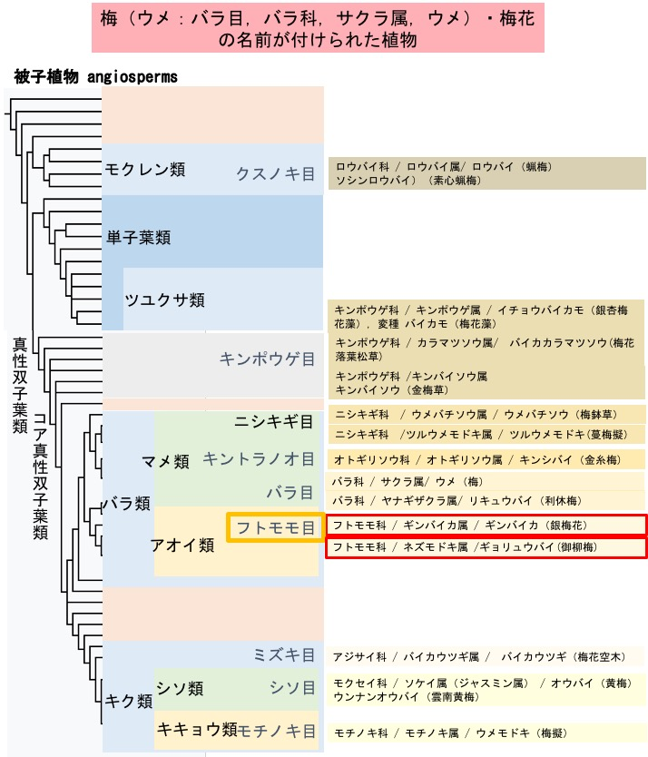 f:id:yachikusakusaki:20200205000437j:plain
