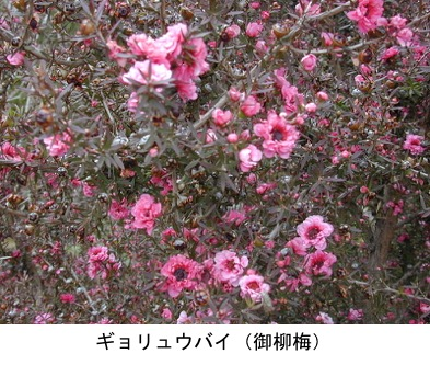 f:id:yachikusakusaki:20200205002027j:plain