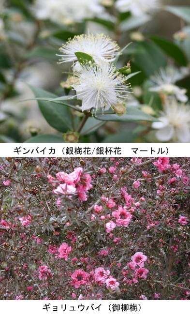 f:id:yachikusakusaki:20200205002139j:plain