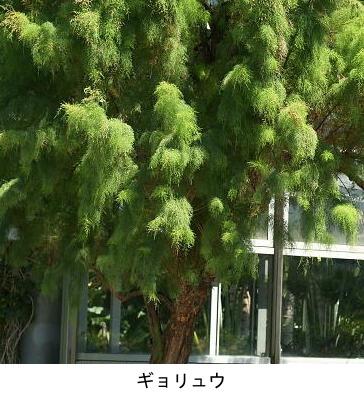 f:id:yachikusakusaki:20200205010945j:plain