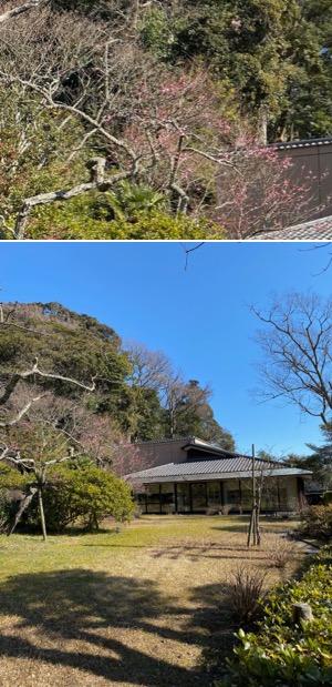 f:id:yachikusakusaki:20200211221756j:plain