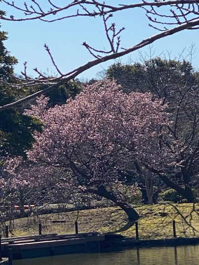 f:id:yachikusakusaki:20200211221858j:plain