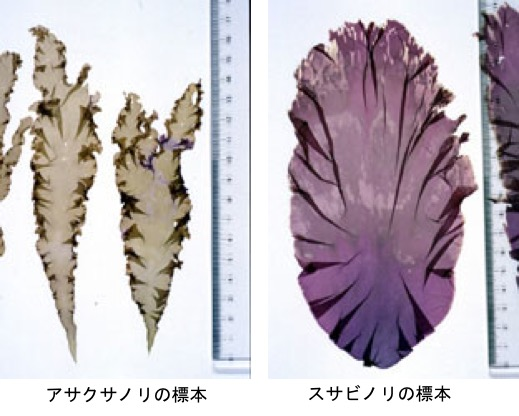 f:id:yachikusakusaki:20200224175059j:plain