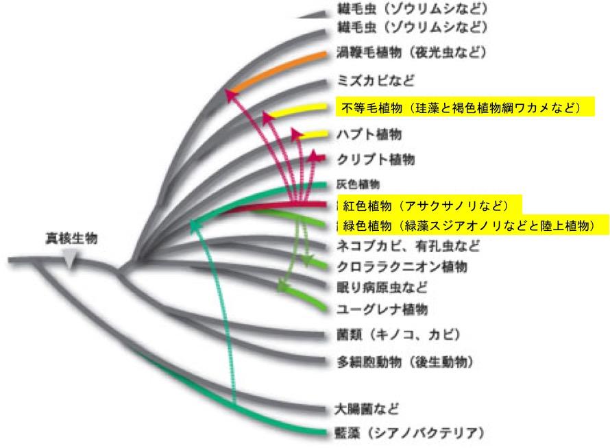 f:id:yachikusakusaki:20200225220434j:plain