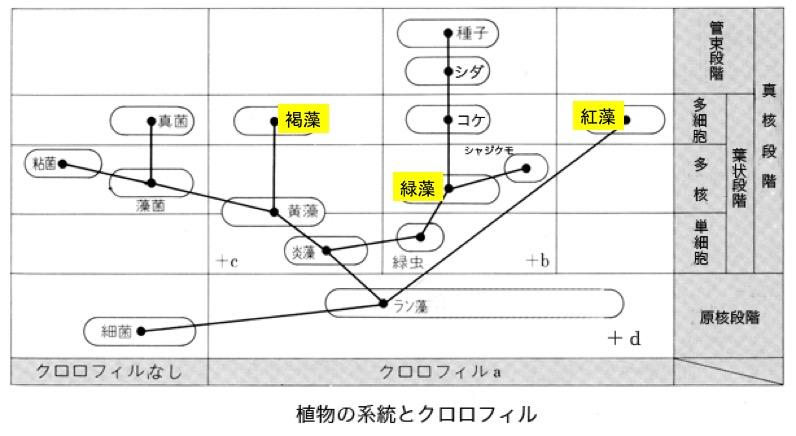 f:id:yachikusakusaki:20200225220510j:plain