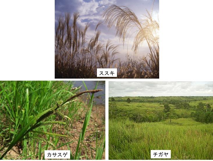 f:id:yachikusakusaki:20200228231052j:plain