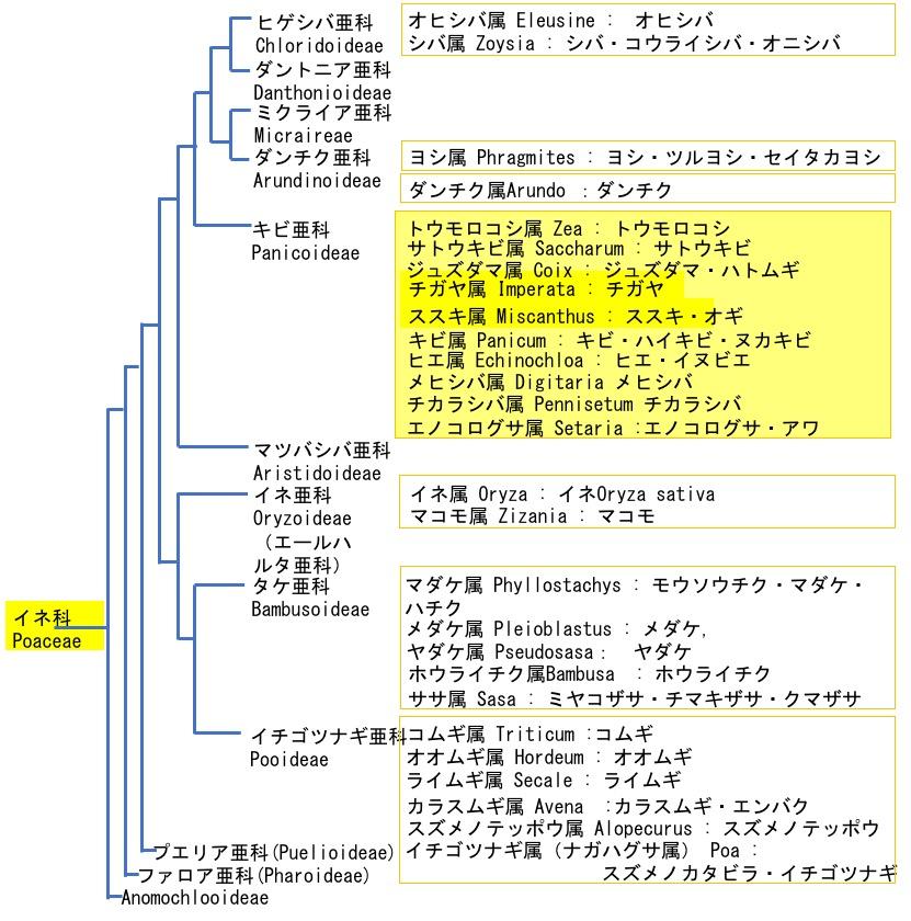 f:id:yachikusakusaki:20200229235809j:plain