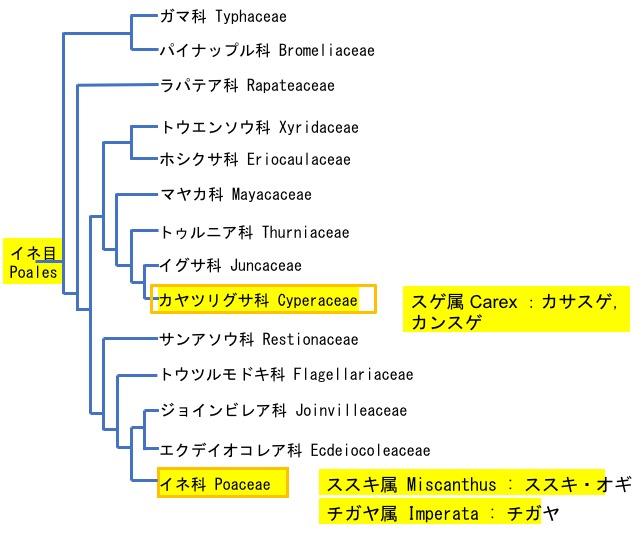 f:id:yachikusakusaki:20200301000056j:plain