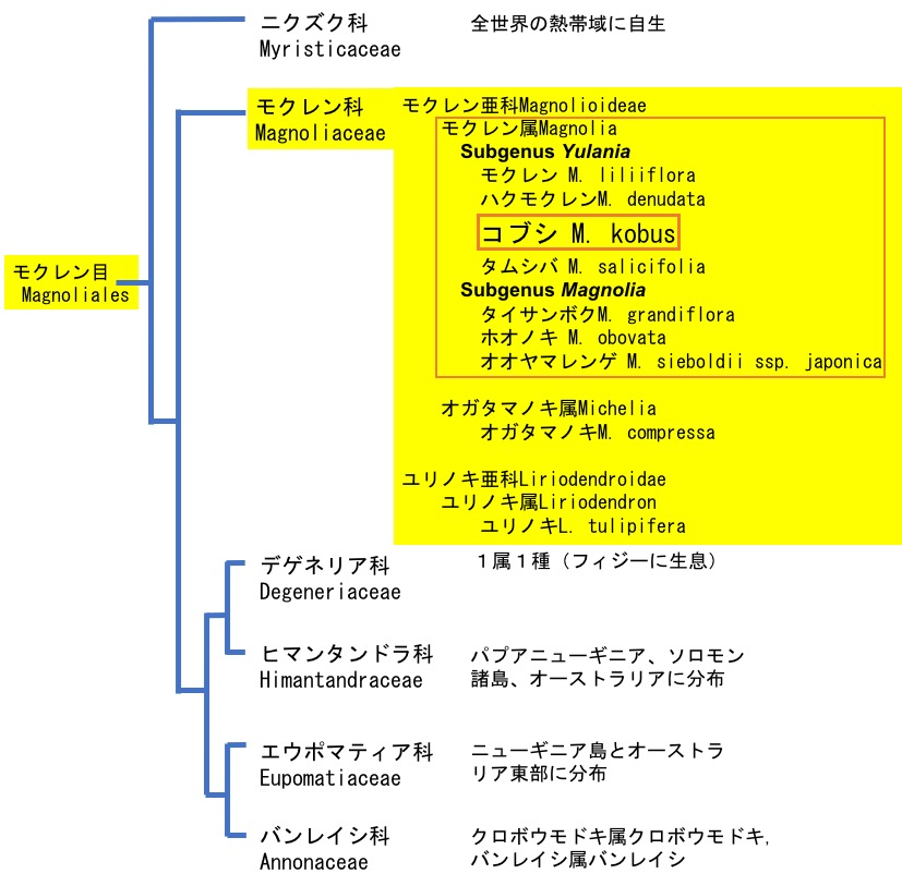f:id:yachikusakusaki:20200314221251j:plain