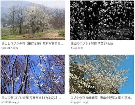 f:id:yachikusakusaki:20200315220146j:plain