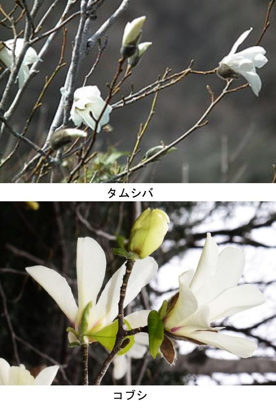 f:id:yachikusakusaki:20200315222702j:plain