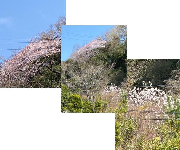 f:id:yachikusakusaki:20200323224112j:plain