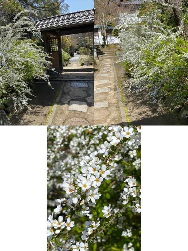 f:id:yachikusakusaki:20200323233453j:plain