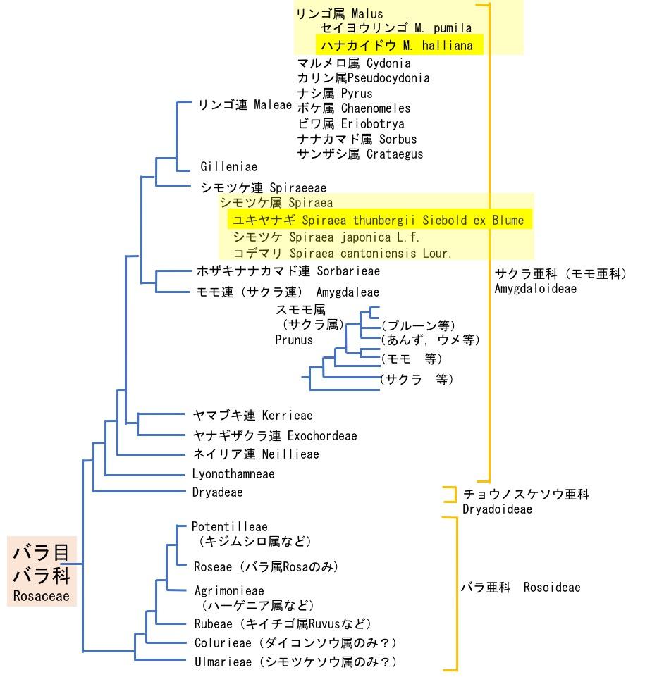 f:id:yachikusakusaki:20200323233531j:plain