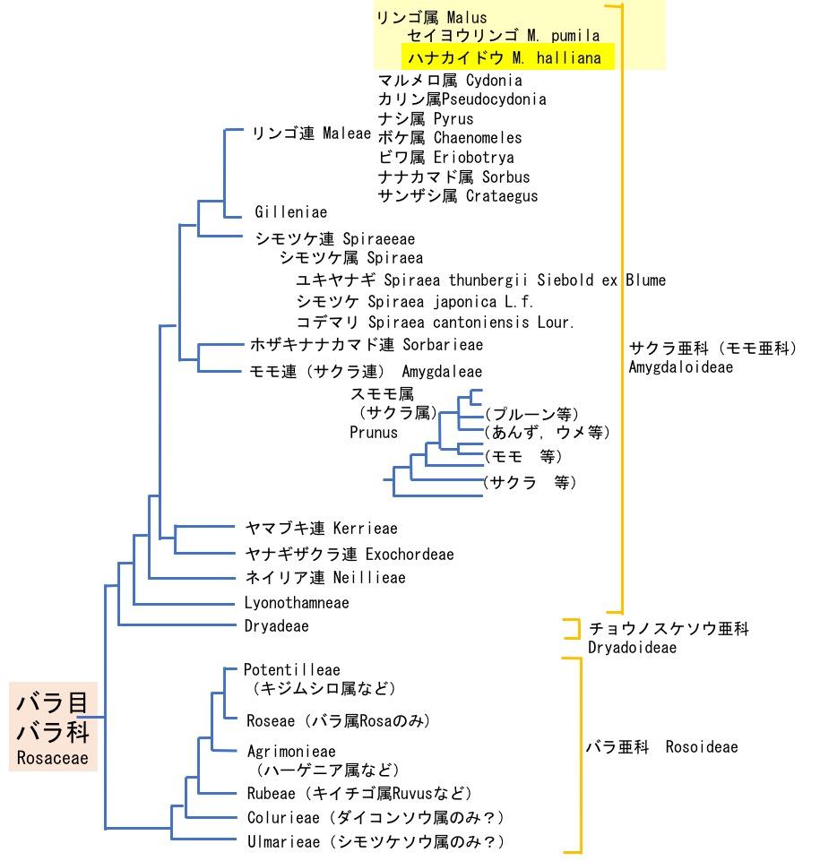 f:id:yachikusakusaki:20200325220457j:plain