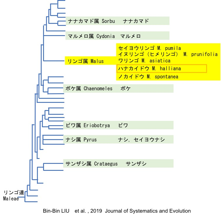 f:id:yachikusakusaki:20200325220632j:plain