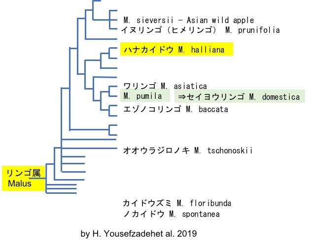 f:id:yachikusakusaki:20200325221229j:plain
