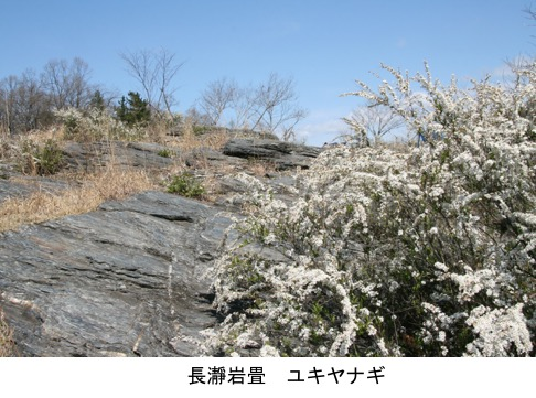 f:id:yachikusakusaki:20200326230016j:plain