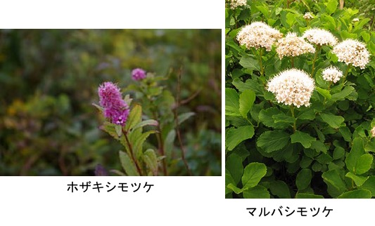 f:id:yachikusakusaki:20200326231742j:plain