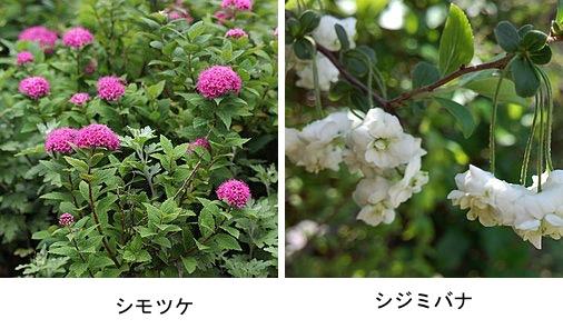 f:id:yachikusakusaki:20200326231750j:plain