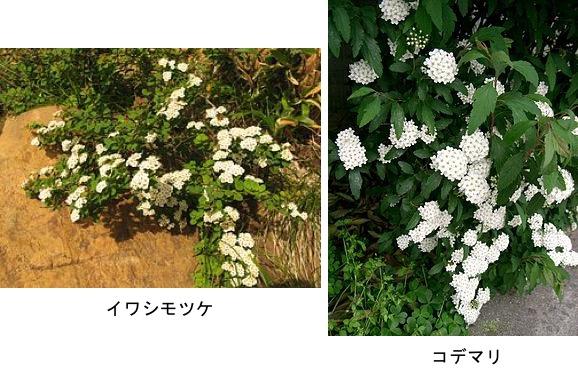 f:id:yachikusakusaki:20200326231758j:plain