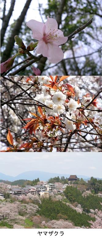 f:id:yachikusakusaki:20200406001142j:plain
