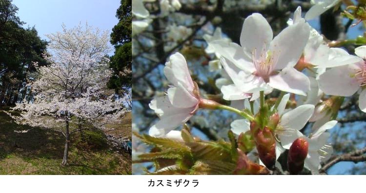 f:id:yachikusakusaki:20200406001421j:plain