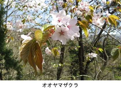 f:id:yachikusakusaki:20200406001454j:plain