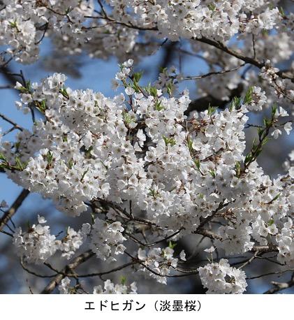 f:id:yachikusakusaki:20200406001517j:plain