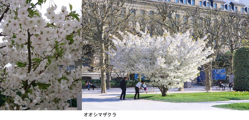 f:id:yachikusakusaki:20200406001604j:plain