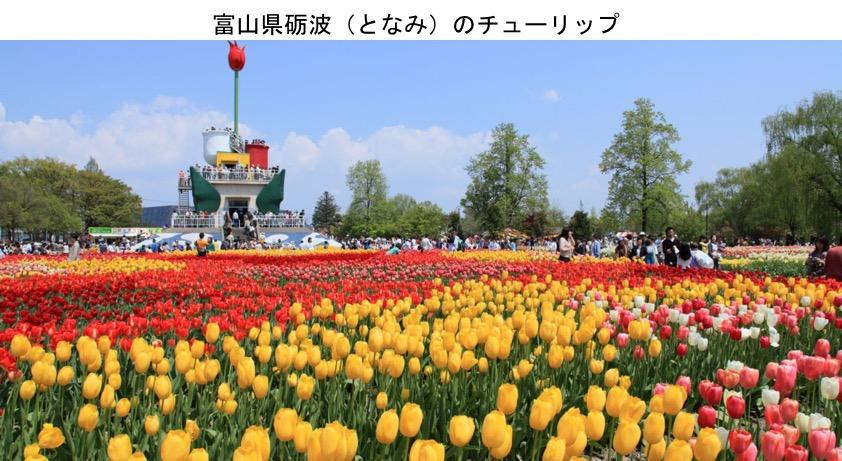f:id:yachikusakusaki:20200408231438j:plain