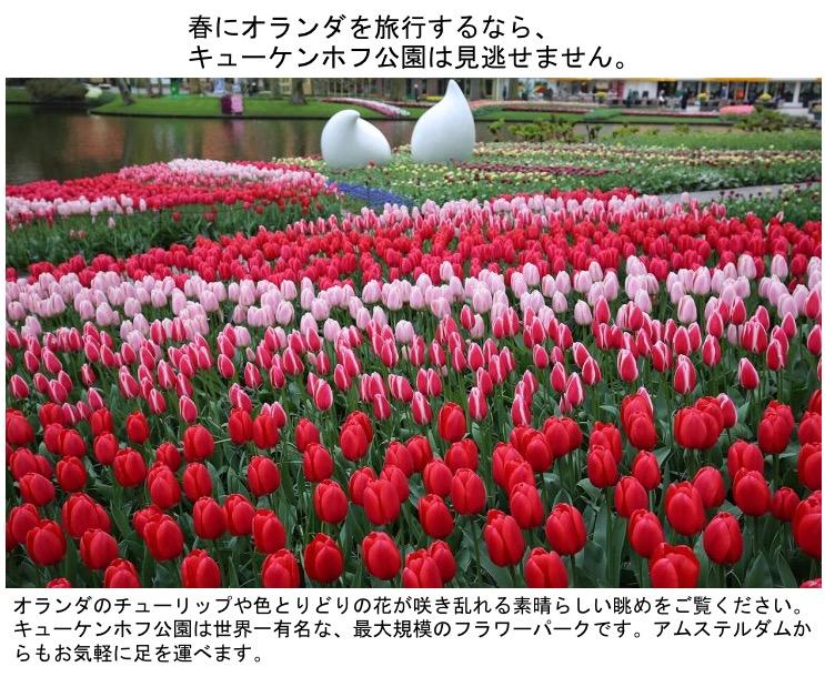 f:id:yachikusakusaki:20200408231648j:plain