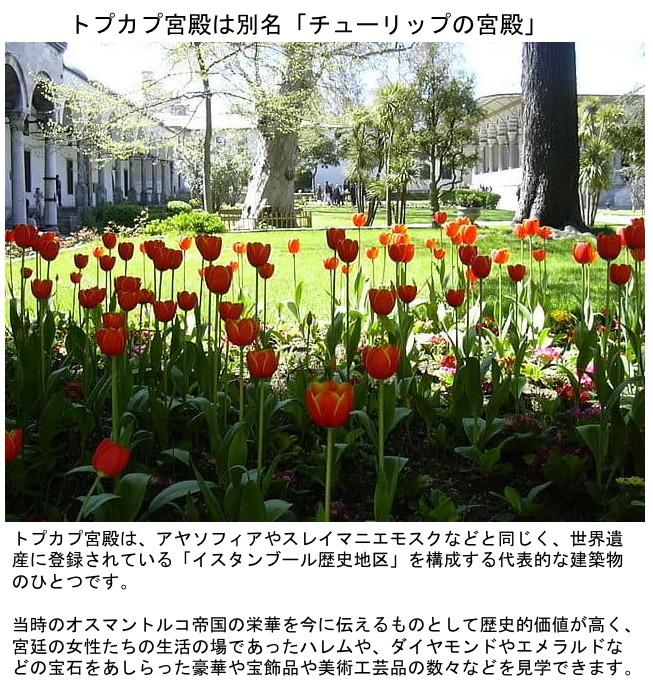 f:id:yachikusakusaki:20200408232629j:plain