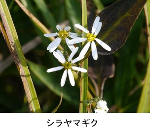 f:id:yachikusakusaki:20200417233753j:plain